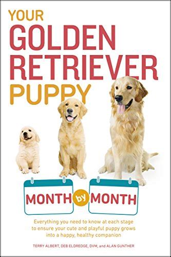 golden retriever stages of development your golden retriever puppy month by month