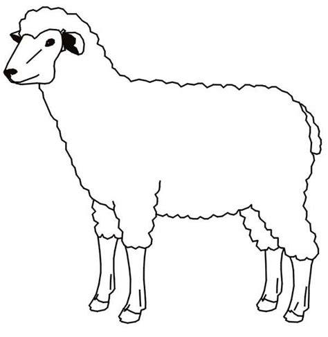 sheep face colouring pages www imgkid com the image