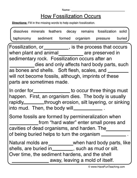 Fossil Worksheets by Fossils Worksheet 1