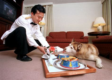service dogs in restaurants world s top 10 luxurious hotels and restaurants for dogs photos ibtimes india
