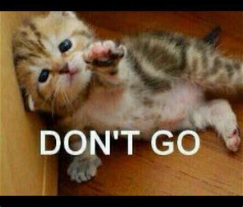 kicau angsa kumpulan meme kucing  gokil  menggelikan