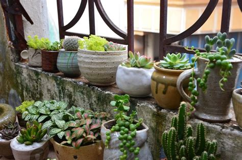 creative ways to decorate your home with plants diy home water and a cloth ideas for a better home and a garden