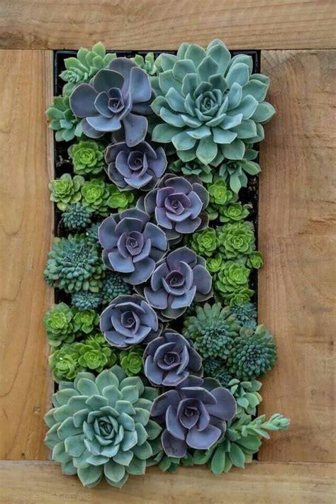 succulent wall gardens 25 beautiful succulent wall gardens ideas on