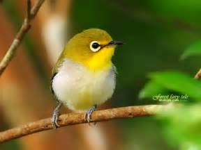 cute little yellow bird wallpaper wallpaper me