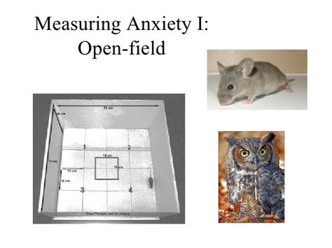 introductory psychology anxiety
