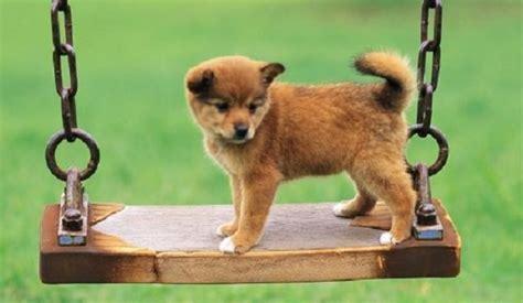 cani per casa giochi per cani idee green