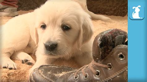 a bunch of puppies a bunch of puppies and a shoe dogs now dogs now