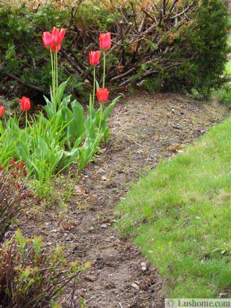 spring landscaping tips spring flowers and yard landscaping ideas 20 tulip bed
