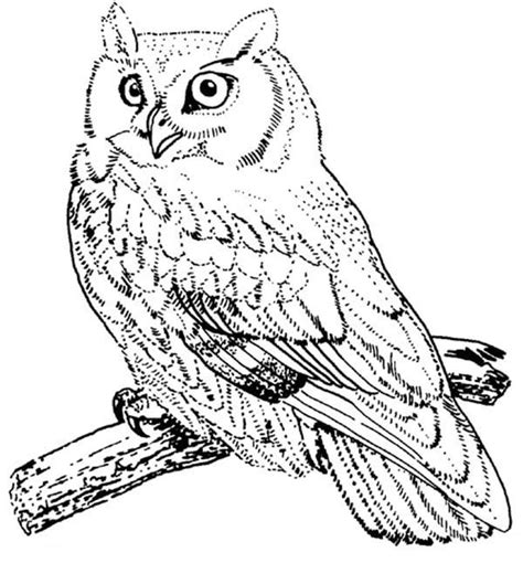 screech owl coloring page screech owl bird coloring page color luna