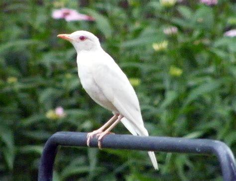 backyard sluts 9 backyard birding big impact why our hobby is so important