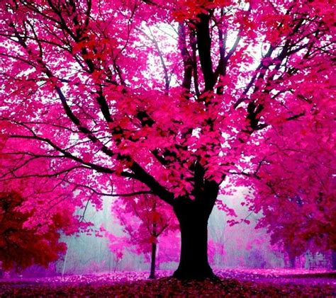Autumn Pink pink trees wallpapers pink trees and