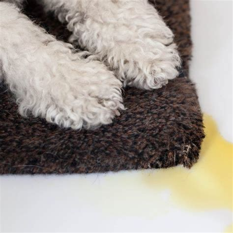 how to get urine out of carpet 1000 ideas about urine on urine odor pet urine and urine stains