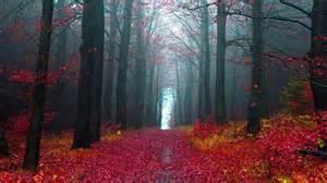 le forest black forest tourism germany next trip tourism