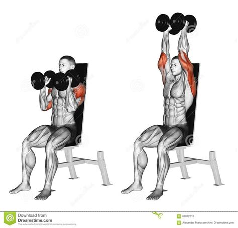 seated shoulder dumbbell press 93 best workout images on work outs fitness
