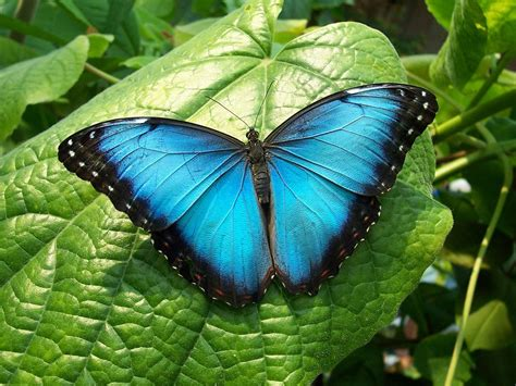 imagenes mariposas gratis fotos de mariposas im 225 genes de mariposas de colores gratis