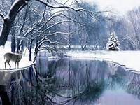 Winter Scenes 45 Stunning Picture 409298 High Definition