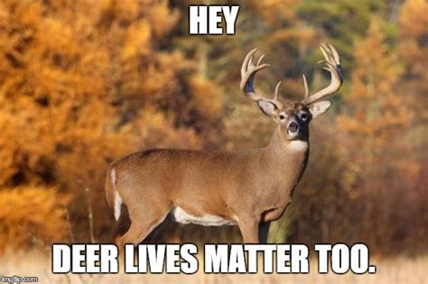 Deer Meme - whitetail deer imgflip
