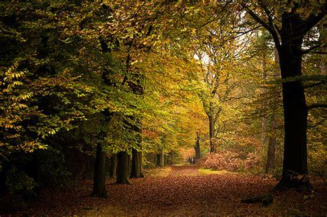 9 Fall Date Ideas by Woods Walk 9 Fall Date Ideas