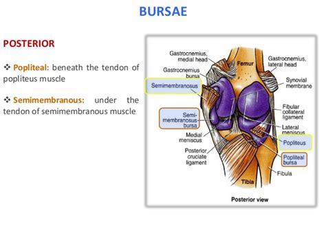Popliteal Bursa Anatomy