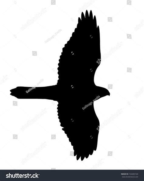 silhouette of the hawk goshawk can be used as hawk