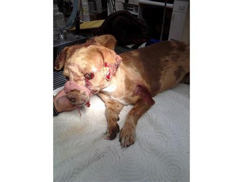 puppy beaten dies after being beaten with shovel banning beaumont ca patch