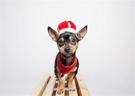 dog halloween party chicago halloween dog costumes chicago west loop amstaphy