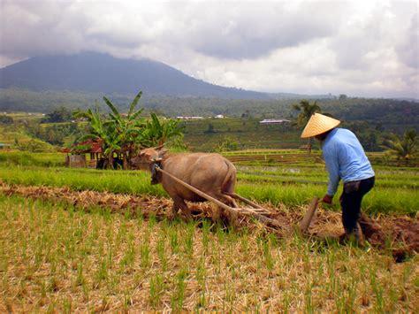 petani hari tani 24 september serikat petani indonesia