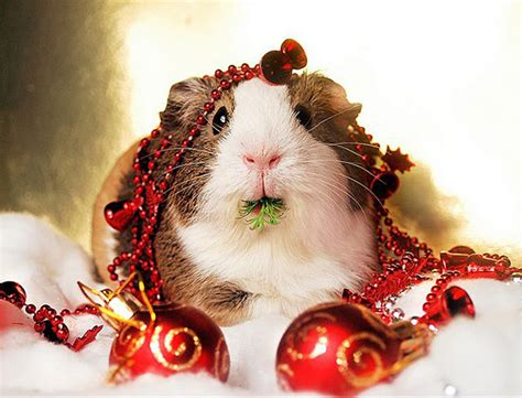 images of christmas animals 55 pictures of funny animals cutely enjoying christmas