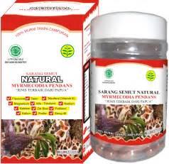 Sarang Semut Asli Herbal Kalimantan sarang semut quot myrmecodia pendans quot asli dari papua wamena isi 60 kapsul murah diskon 20