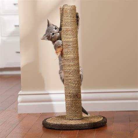 Costruire Un Tiragraffi tiragraffi per gatti accessori gatto migliori