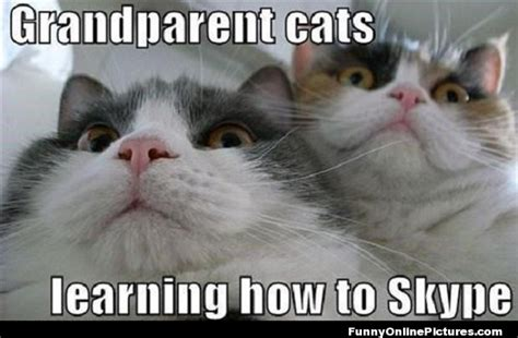 Cat Pics Meme - grandparents cat meme