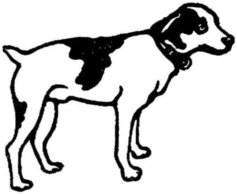 black and white dogs black white dogs graphics picgifs