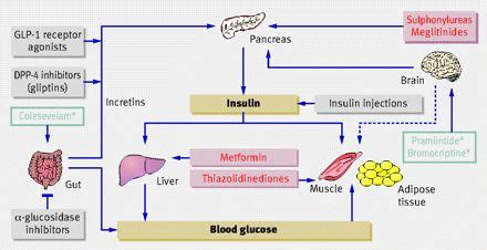Colesevelam Detox by 49 Best Images About Pharmacology On