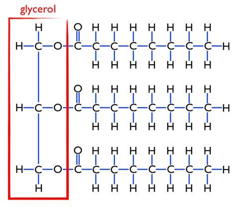 triglyceride molecule diagram fibrates for triglycerides keywordsfind