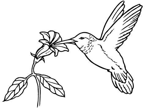 mewarnai gambar burung lucu untuk anak paud dan tk mewarnai gambar
