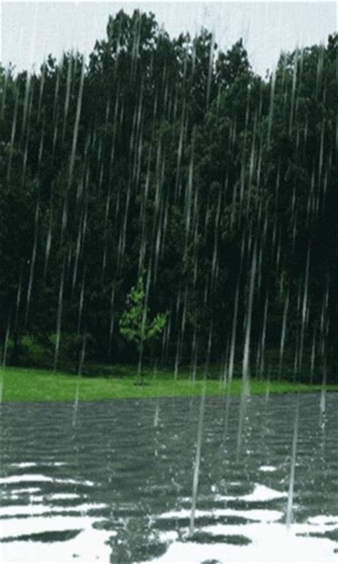 live rain themes forest rain live wallpaper app for android