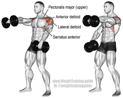 alternating dumbbell front raise muscles worked