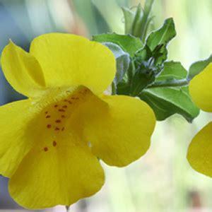fiori di bach in gravidanza i fiori di bach in gravidanza dott ssa elisa canini