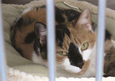 orange county pound o c animal shelter thankful for community s generosity news dailyprogress