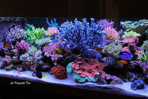 Hiasan Akuarium Coral Anemon S top ten aquariums of all time nominate now page 12