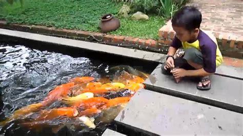 tato ikan koi kecil lucu anak kecil memberi makan ikan koi youtube