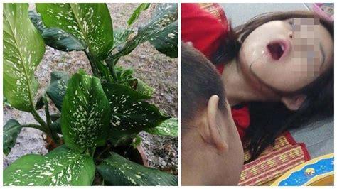 gigit tanaman hias anak   alami kejang