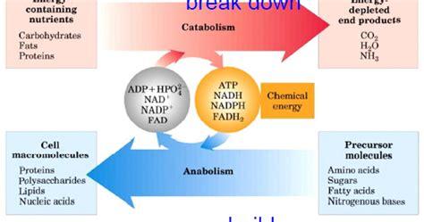 proteine e aminoacidi fanno nutrizione996 nutrizione e ironia le proteine fanno