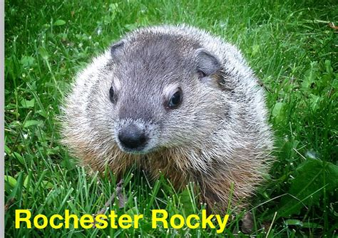 groundhog day italiano groundhog day means the return of rochester rocky he s