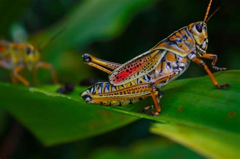 colorful insects colorful insect