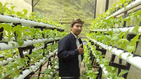 cara membuat nutrisi hidroponik sayuran teknik budidaya sayuran hidroponik youtube