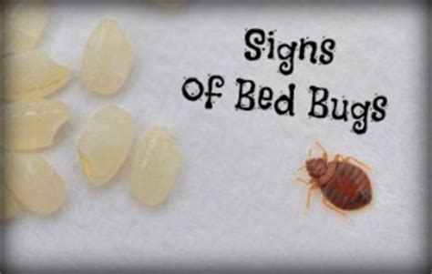 what causes bed bugs to come out 4 signs of bed bugs and a remedy for bug bites hopingfor