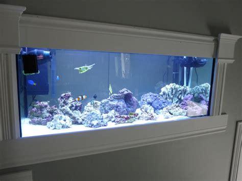 inside wall aquarium have the ultimate fish tank built wall mounted reef aquarium aquarium design ideas