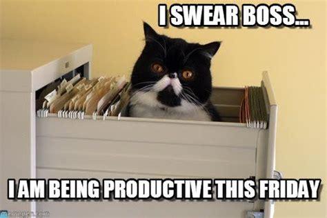 Friday Cat Meme - friday tgif happyfriday fridaymemes memes weekend