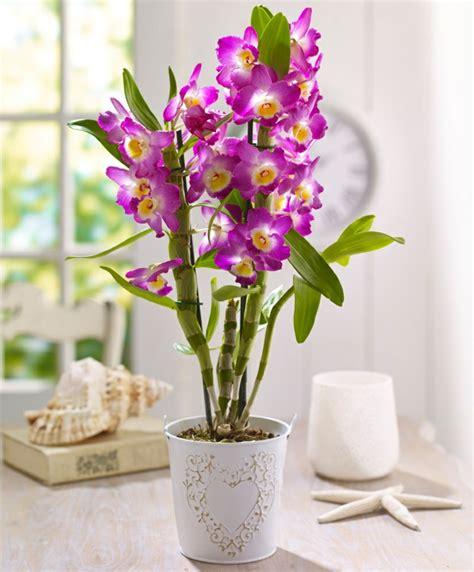 Build A Small House tipps zur orchidee pflege wie 252 berdauert die orchidee